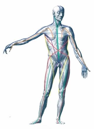 anatomyTrains