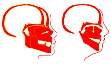 FacialGrowth