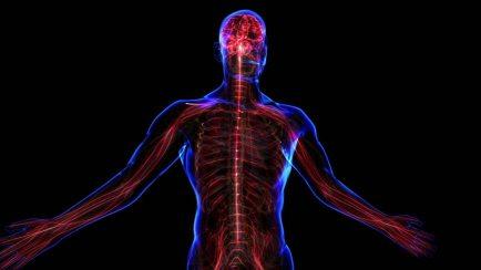 nervousSystem